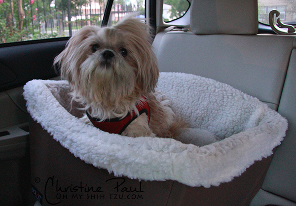Shih Tzu Car Travel