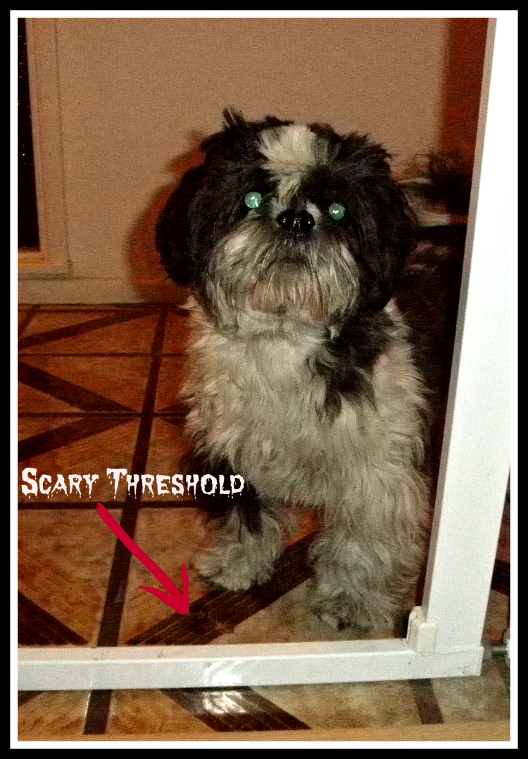 Shih Tzu Training Trick To Calm A Fear Omst