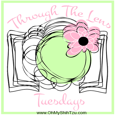 Through the Lens Tuesdays Logo