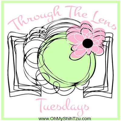 TTL-Logo-Big