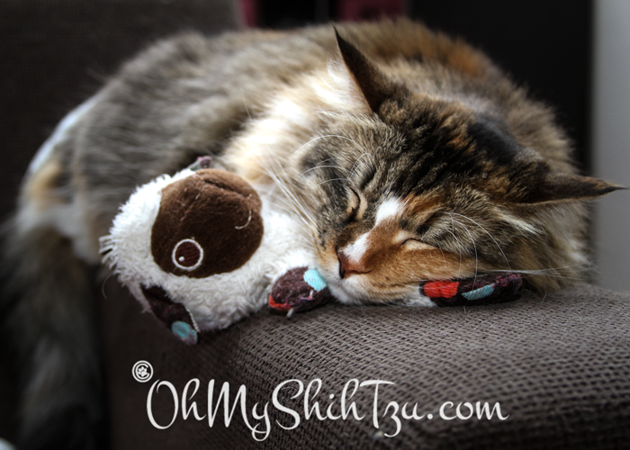 Baby Kitty Sleeping with Toy