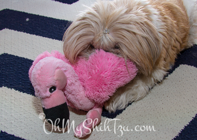 Katie & her stuffed pink flamingo