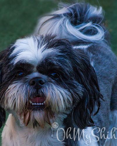 Best Dog Groomers in Fresno