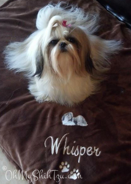 Super Shih Tzu Saturday Whisper