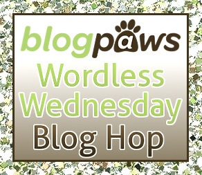 Black Cat - Wordless Wednesday Blog Hop