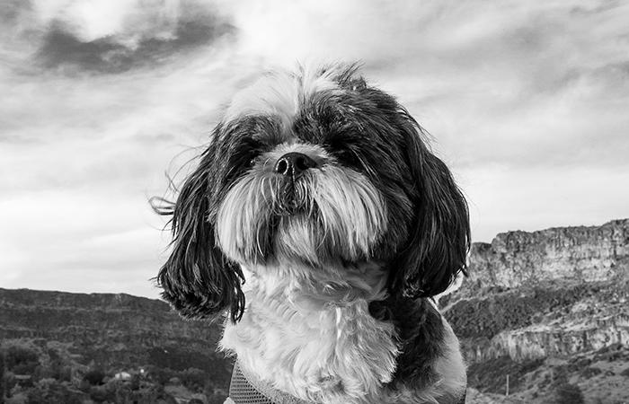 Black & White Sunday: Shoshone Falls