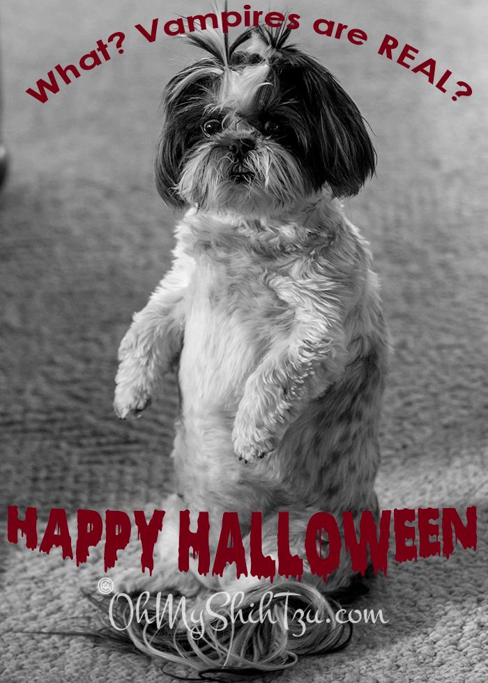 Shih Tzu Halloween