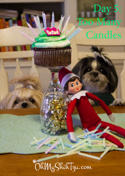 Elf on the Shelf Shih Tzus
