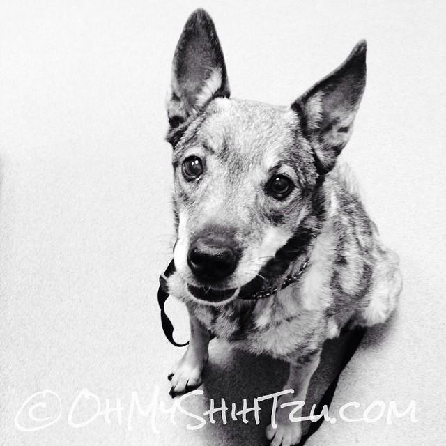 Sister Kyra is having little seizures ? #dogs #dogsofinstagram #olddogs