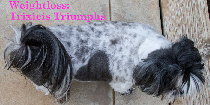 Weight Loss Benefits for Shih Tzus : Trixie's Triumphs