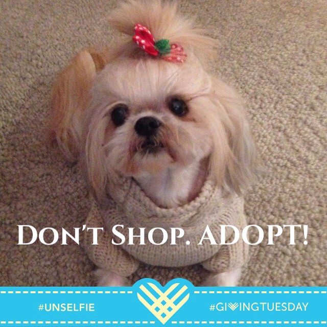It's that time of year, open your heart and home to a little dog, there are many purebreds available at local shelters and rescues. Remember dogs are members of the family, never give as a gift. #unselfie #givingtuesday #dogs #dogsofinstagram #shihtzu #shihtzunation #shihtzulover