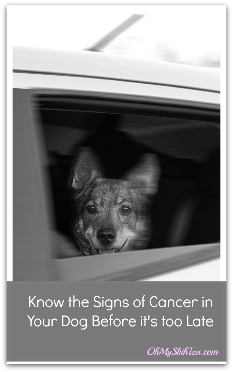 Cancer In Dogs 8 Signs It Can Happen To You Omst