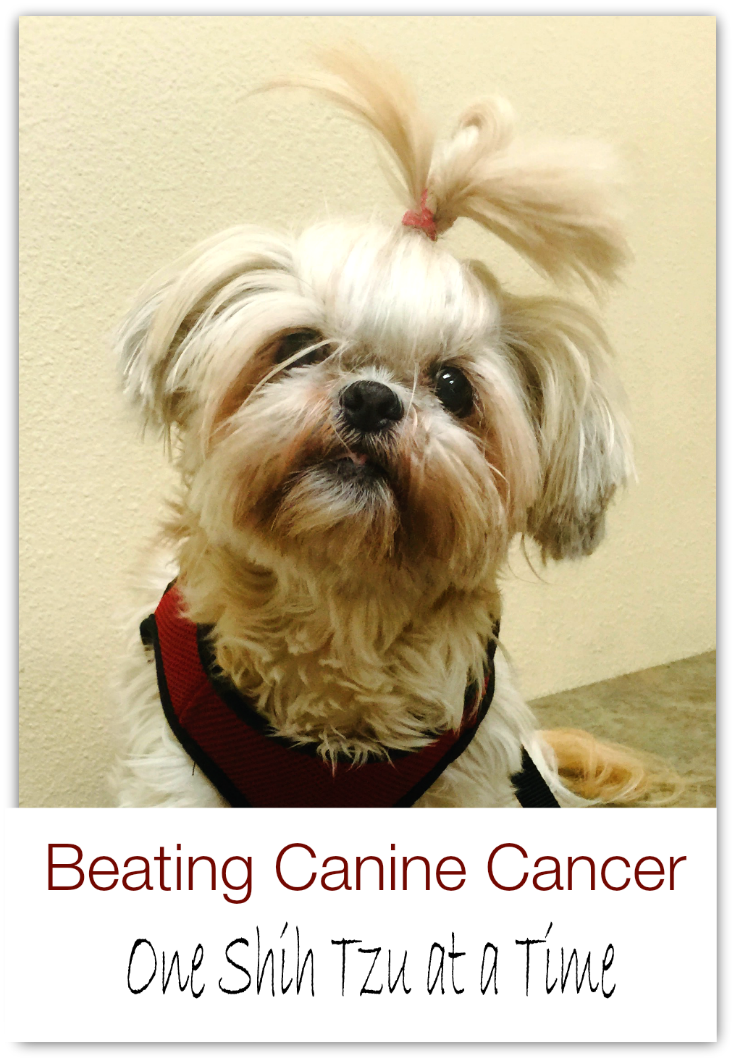 Beating Canine Cancer