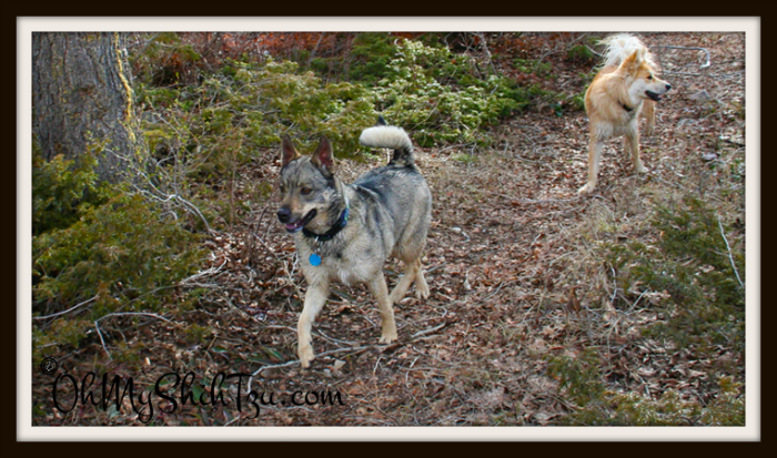 Kyra Sweetest Dog Hiking
