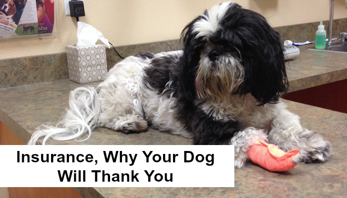 Pet Insurance Why Your Pet May Thank You Oh My Shih Tzu