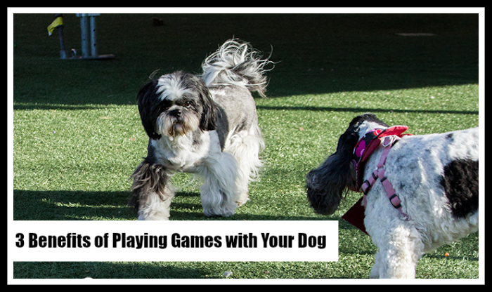 3 Benefits of Playing Games with Your Dog
