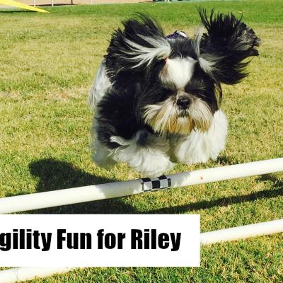 Making Dog Agility Fun for Riley