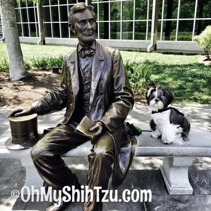 Memorial Day Shih Tzu