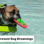 dog drownings