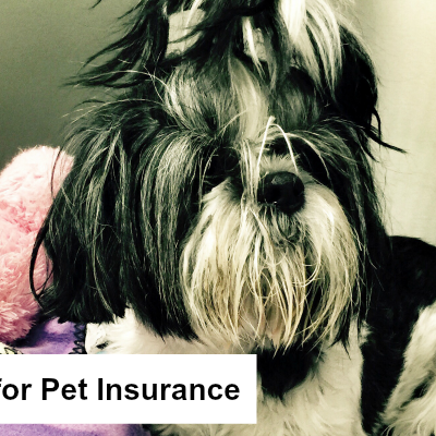 Why I'm Thankful for Pet Insurance