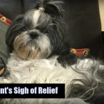 Pet Parent Sigh of Relief Featured Image