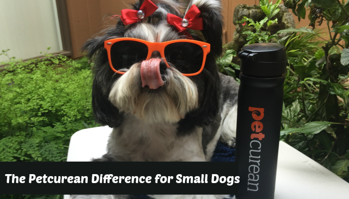 Petcurean Difference Featured Image Shih Tzu w/Tongue out