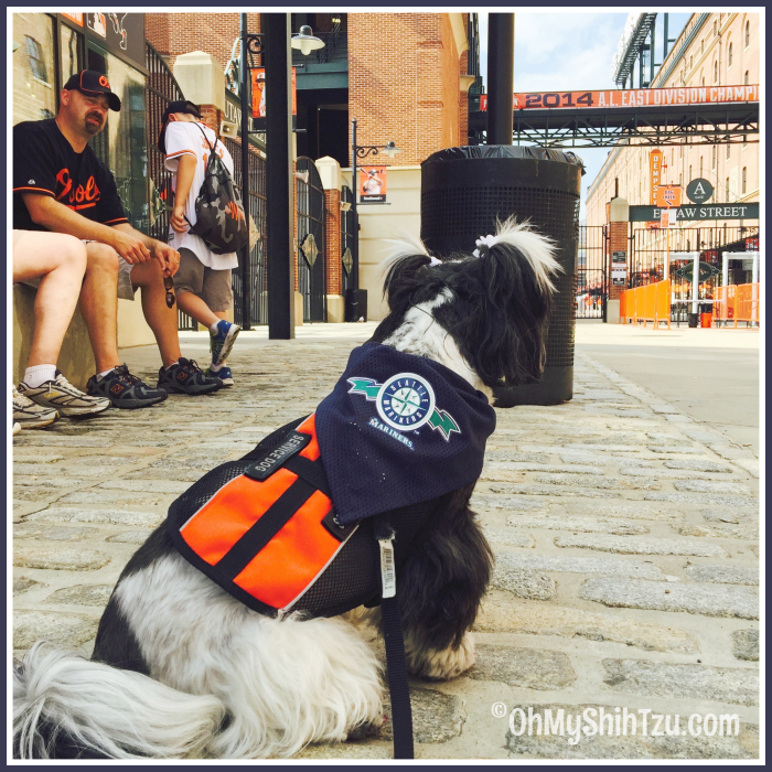 Camden Yard Shih Tzu Travel