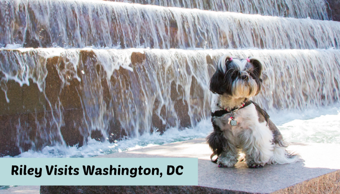 Shih Tzu Travels to Washington DC