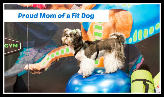 Proud Mom of a Fit Dog!