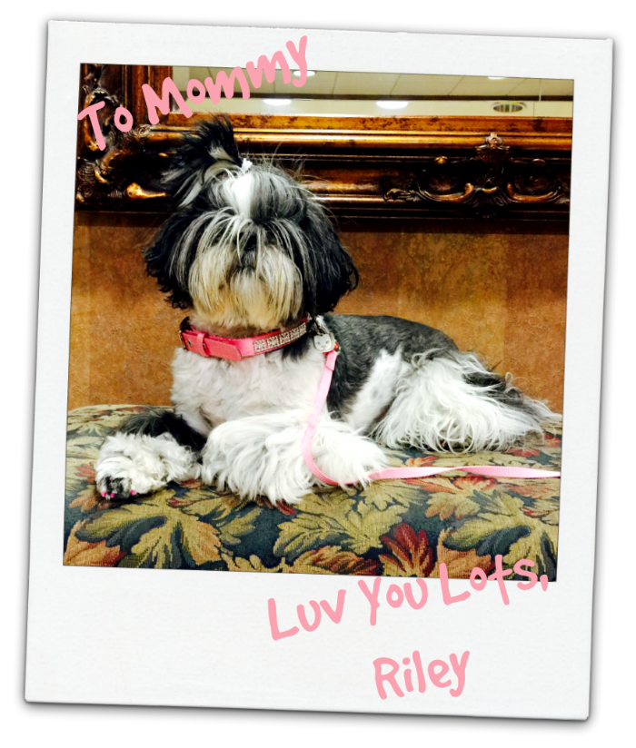 Love of a Shih Tzu Image of Riley Shih Tzu