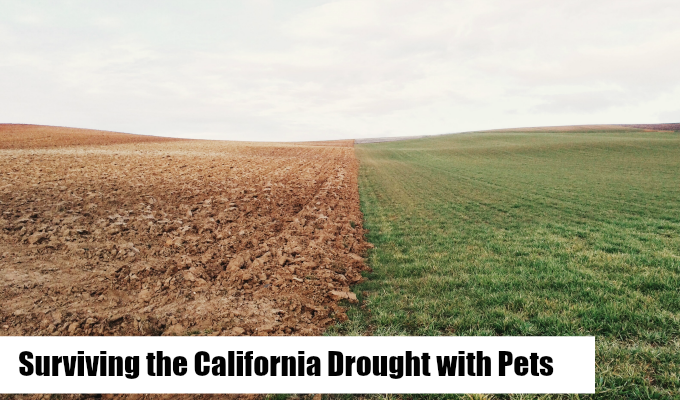 California Drought with pets