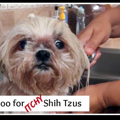 A Shih Tzu Shampoo Bar – A Sparkle Bar Review & Giveaway