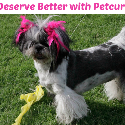 Your Pets Deserve Better This New Year with Petcurean