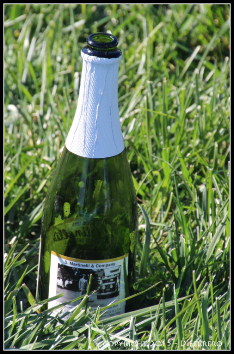 Lure Course Shih Tzu, Celebration Bottle of Sparkling Cider