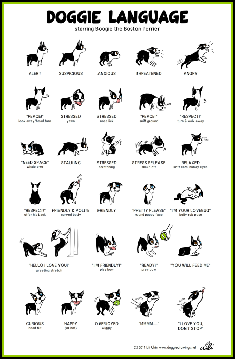 Puppy Introductions, Dog Body Language Chart by Lili Chin