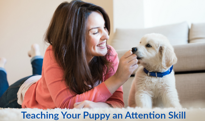 Attention Skill for your puppy