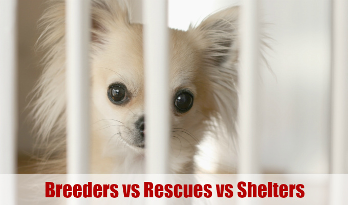 Chihuahua behind bars, Dog Breeders