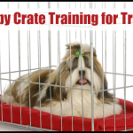 Puppy Crate Training Featured Image