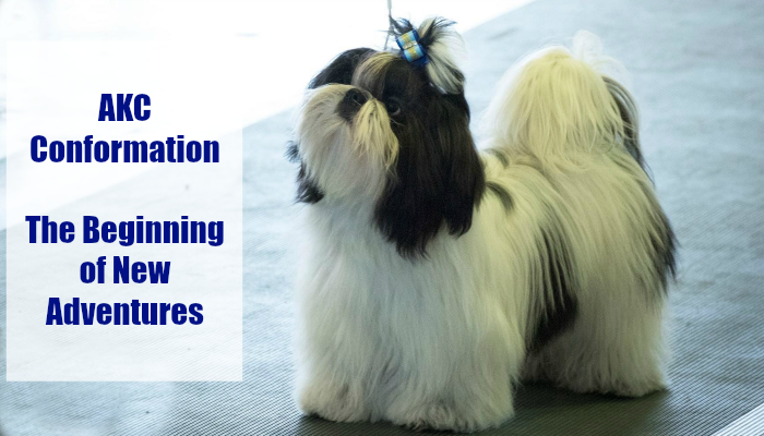 AKC Conformation The Beginning of New Adventures