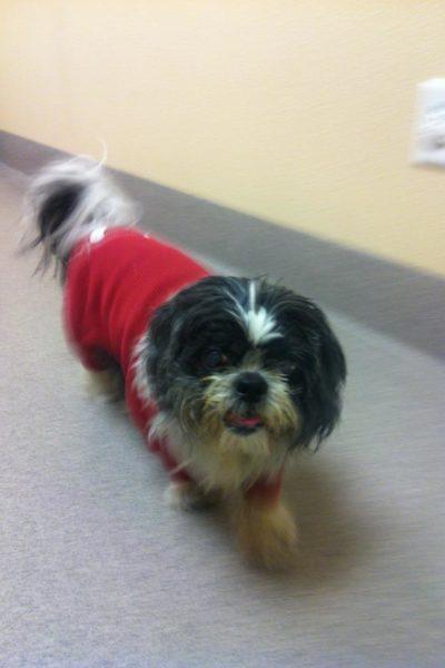 Wordless Wednesday – A Rescued Senior Dog
