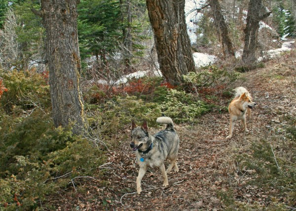 Trail Stroll