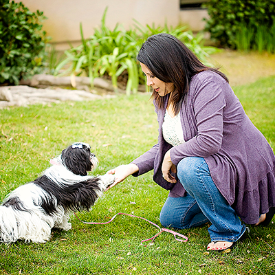 Shih Tzu Training & Tips: Reach for the Clicker