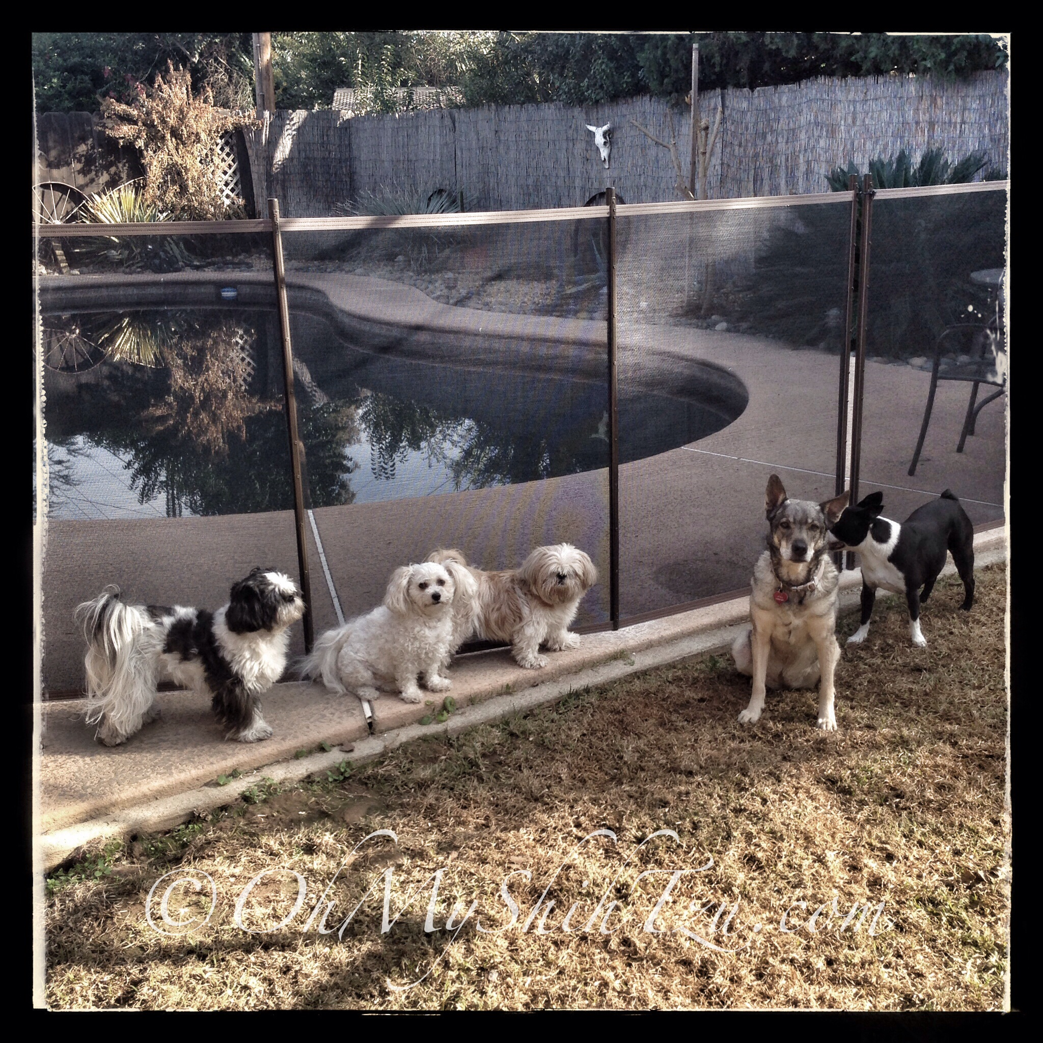 A New Pet Safe 4 Mesh Fence Was Installed To Keep The Littles Out Of Pool Area But Enjoy Backyard That They Love By