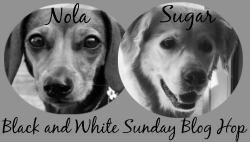 Black n White Sunday Blog Hop Badge