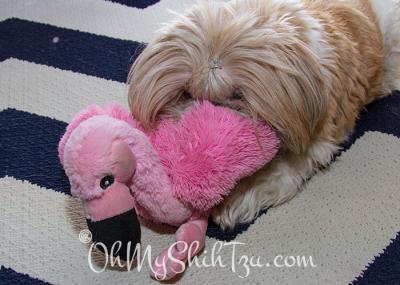 Katie & her stuffed pink flamingo