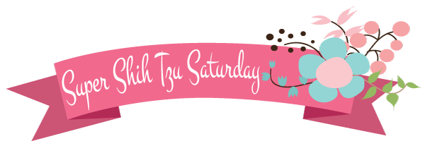 Super Shih Tzu Saturday Logo