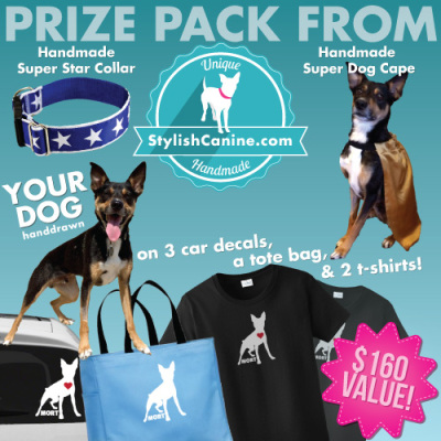 Pet Giveaway Stylish Canine