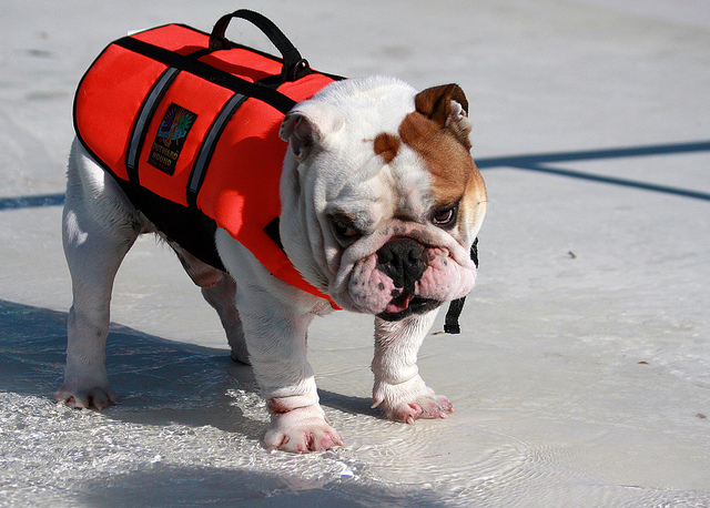 Cool Summer Dog