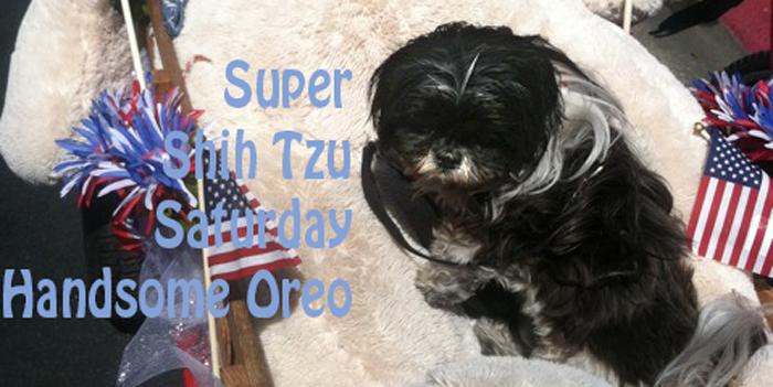 Super Shih Tzu Oreo