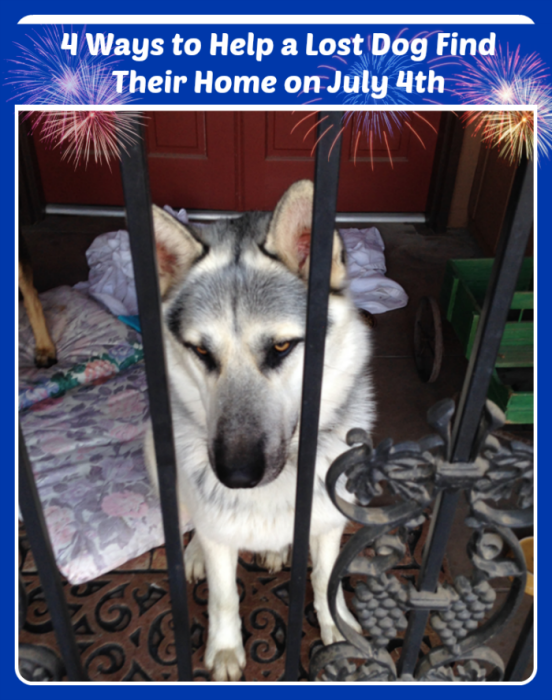 Lost Dog 4th of July